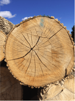 Understanding Wood For Building Purposes Heartwood Mills
